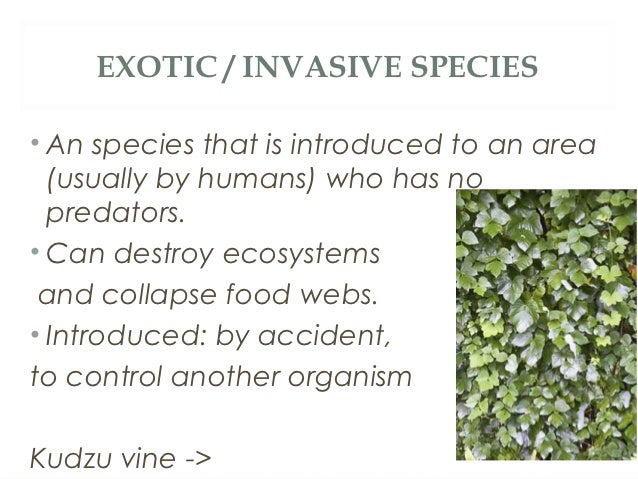 EXOTIC / INVASIVE SPECIES• An species that is introduced to an area  (usually by humans) who has no  predators.• Can destr...