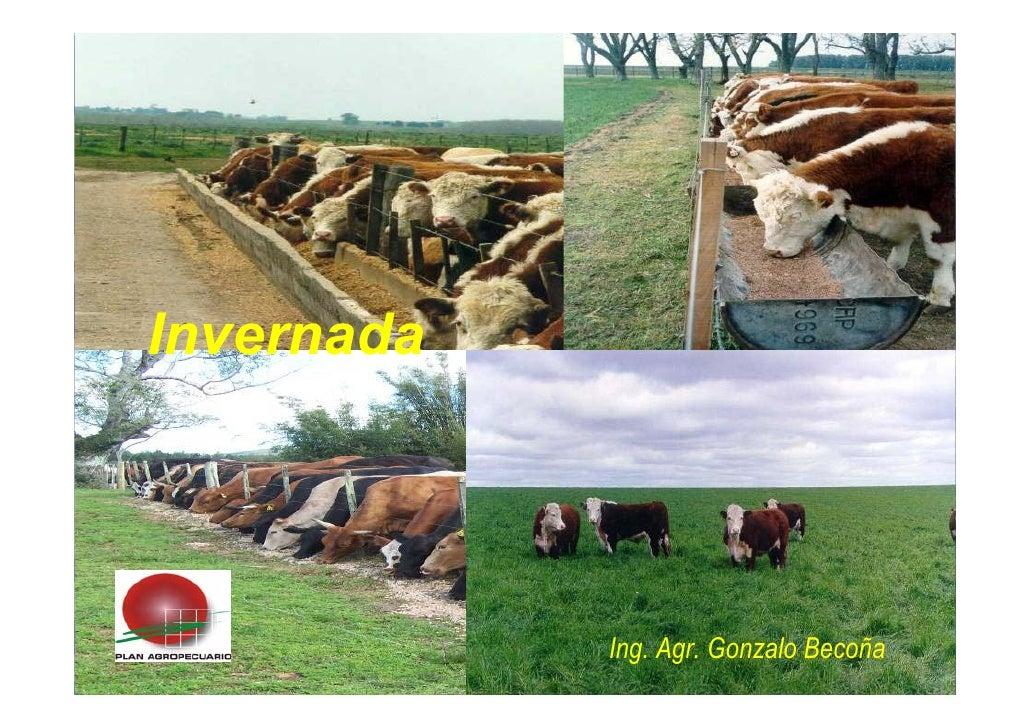 Invernada                 Ing. Agr. Gonzalo Becoña