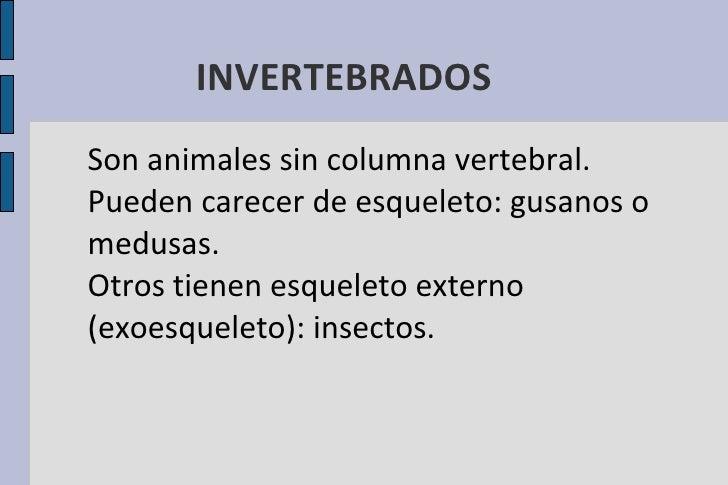 INVERTEBRADOS <ul><li>Son animales sin columna vertebral.