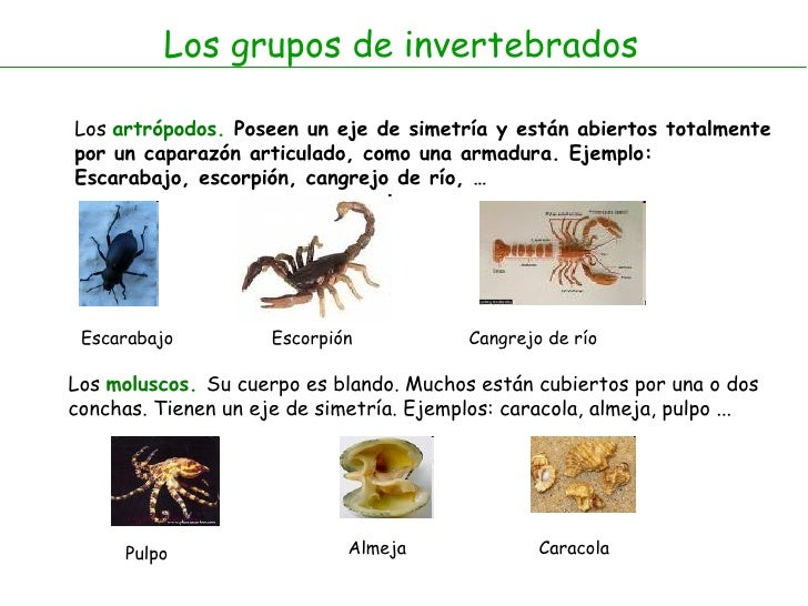 Los caros insectos diminutos que viven en el polvo - Donde viven los acaros ...