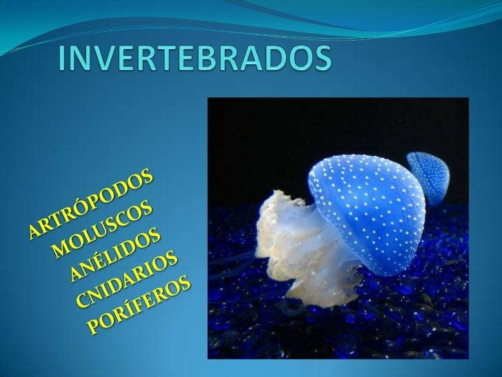 INVERTEBRADOS<br />ARTRÓPODOS<br />MOLUSCOS<br />ANÉLIDOS<br />CNIDARIOS<br />PORÍFEROS<br />