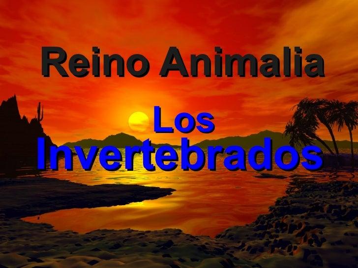 Reino Animalia Los  Invertebrados