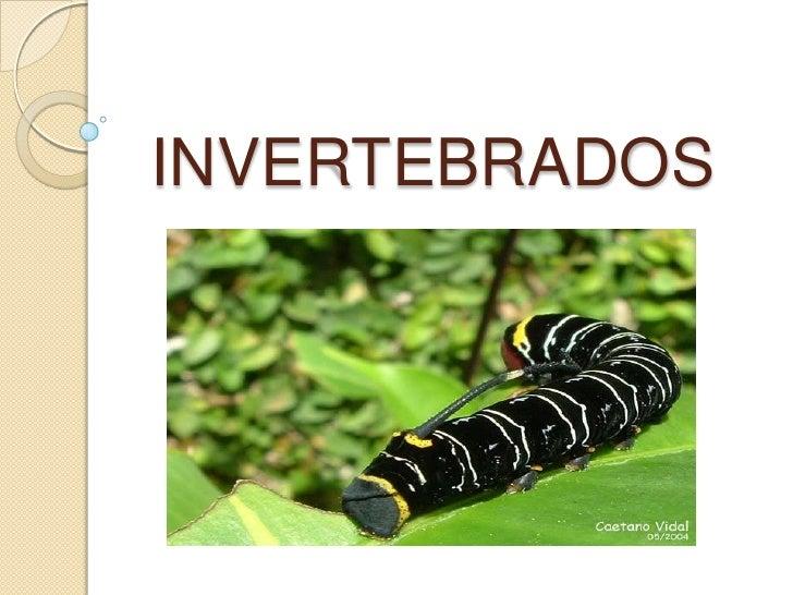 INVERTEBRADOS <br />
