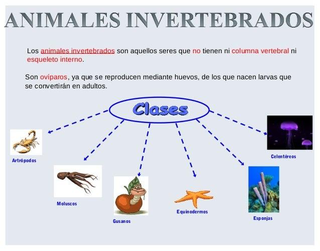 Invertebrados c naturales tercero primaria for Definicion de cuarto