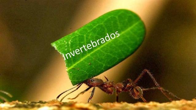 Internacional School of Carpina Mateus Cortes Galvão Invertebrados Trabalho solicitado ao 7 grade pela teacher Keilha Barr...