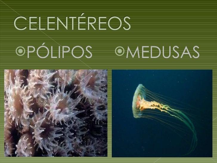 Invertebrados deniz 1ºb Slide 3