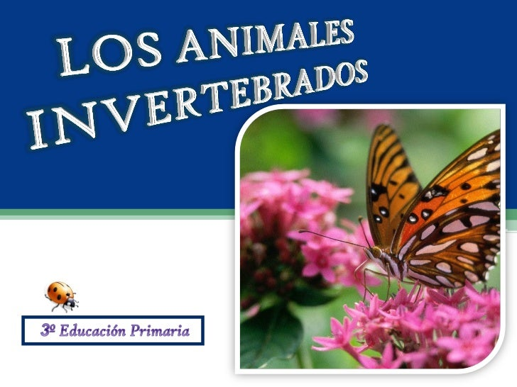 Animales             InvertebradosMedusas   Gusanos    Moluscos   Artrópodos                                  Miriápodos  ...