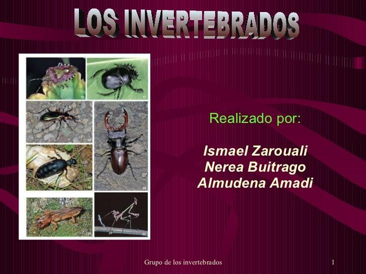 Realizado por: Ismael Zarouali Nerea Buitrago Almudena Amadi LOS INVERTEBRADOS