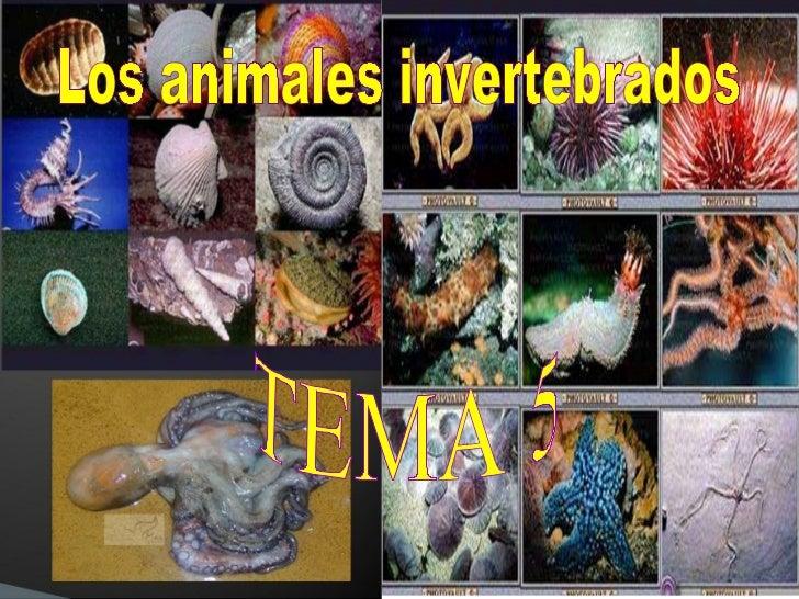 Los animales invertebrados TEMA 5