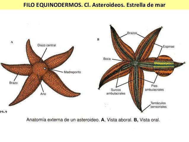 Invertebrados ii