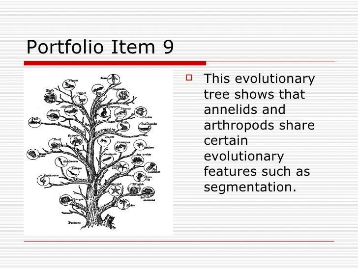 Invertebrate Portfolio