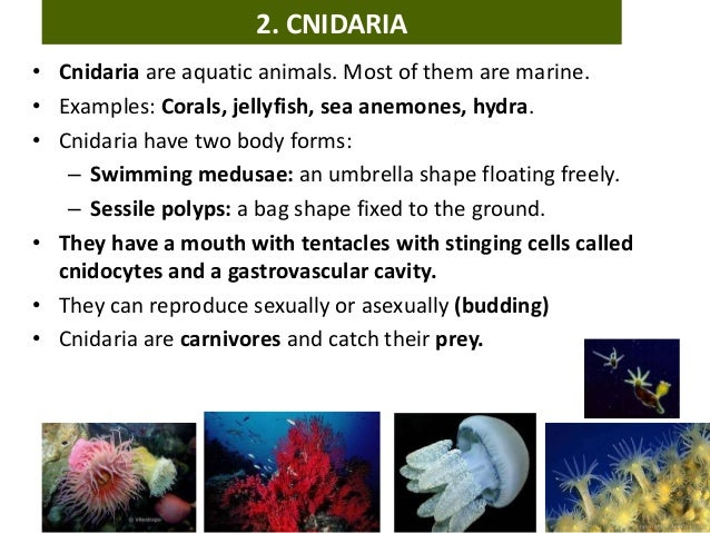 Invertebrate Animals