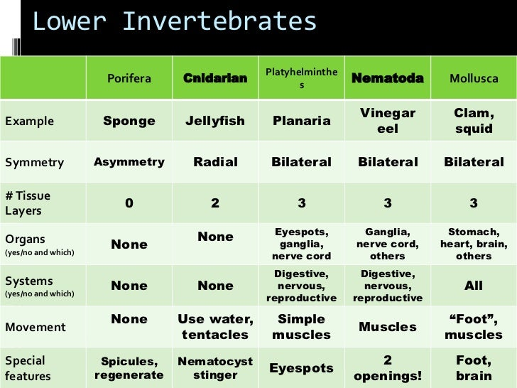 Invertebrate Review Chart on Animal Groups Worksheet