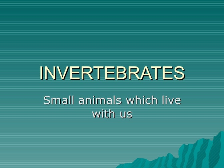 INVERTEBRATES Small animals which live with us