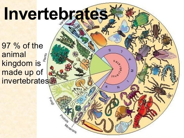 97 % of the animal kingdom is made up of invertebrates.