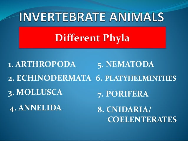 differences in animal phyla There are millions of different organisms that have been  the largest animal phylum containing all the  phylum: characteristics & classification related study.