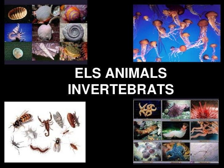ELS ANIMALSINVERTEBRATS