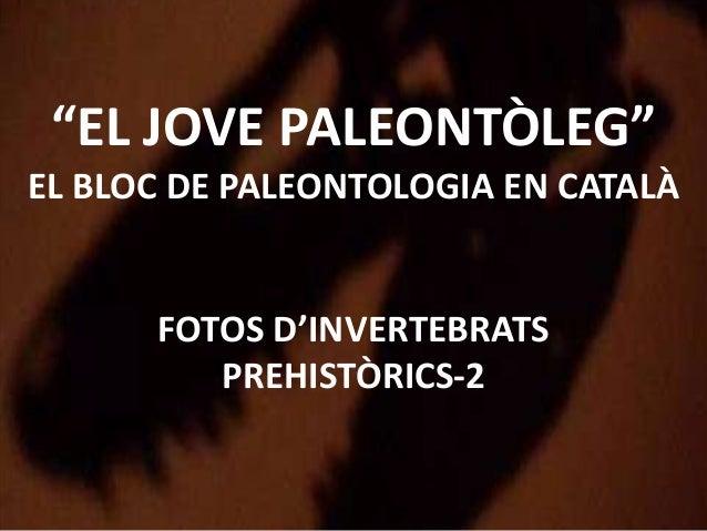 """""""EL JOVE PALEONTÒLEG""""EL BLOC DE PALEONTOLOGIA EN CATALÀFOTOS D'INVERTEBRATSPREHISTÒRICS-2"""