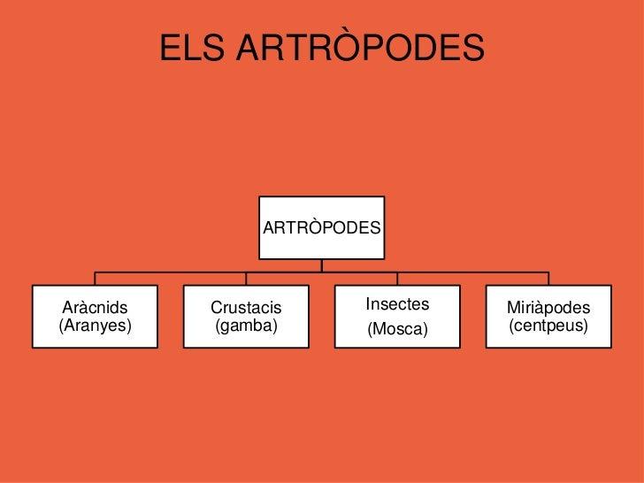 Constitueixen el 80 % d'espècies animals conegudes</li></li></ul><li>ELS ARTRÒPODES<br /><ul><li>Realitzen mudes per poder...