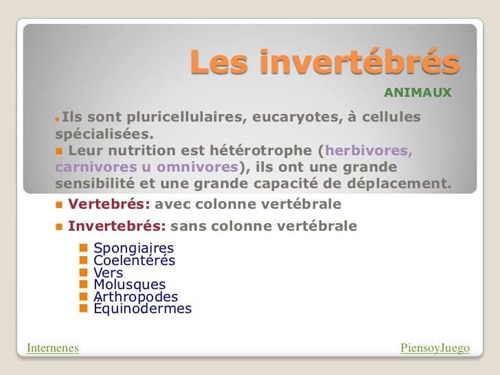Les invertébrés                                                ANIMAUX     Ils sont pluricellulaires, eucaryotes, à cellu...