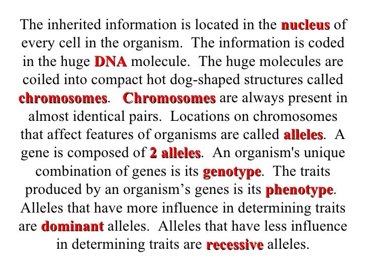 The inherited information is located in the  nucleus  of every cell in the organism.  The information is coded in the huge...