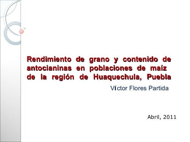Rendimiento de grano y contenido de antocianinas en poblaciones de maíz  de la región de Huaquechula, Puebla V í ctor Flor...
