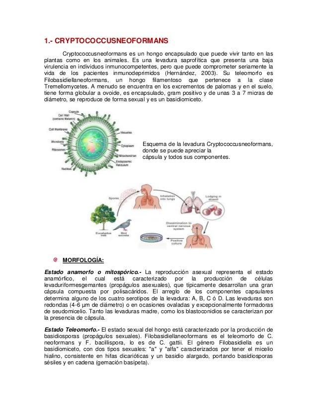 1.- CRYPTOCOCCUSNEOFORMANS        Cryptococcusneoformans es un hongo encapsulado que puede vivir tanto en lasplantas como ...