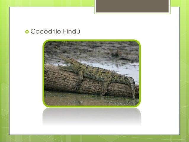 Cocodrilo del nilo reproduccion asexual de las plantas