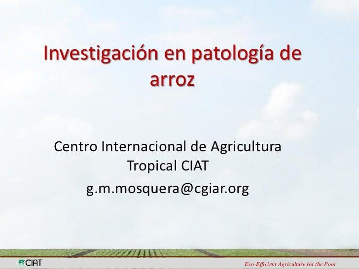 Investigación en patología de            arroz Centro Internacional de Agricultura            Tropical CIAT     g.m.mosque...