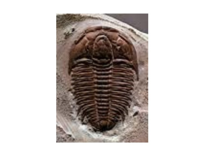 Investigamos algunos fósiles