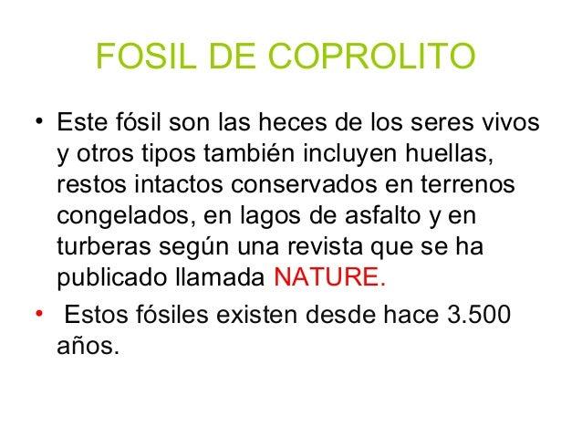 FÓSILES DE BRAQUIÓPODOS Plesiothyris Verneuili era en realidad un BRAQUIÓPODO. Su concha se ha transformado en roca.