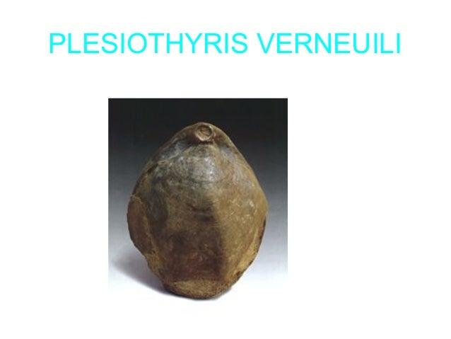 EL AMONITES • Los ammonoideos , conocidos comúnmente como ammonites, son una subclase de moluscos cefalópodos extintos que...