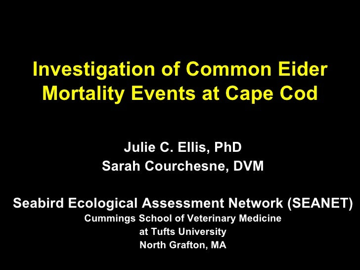 Investigation of Common Eider Mortality Events at Cape Cod Julie C. Ellis, PhD Sarah Courchesne, DVM Seabird Ecological As...