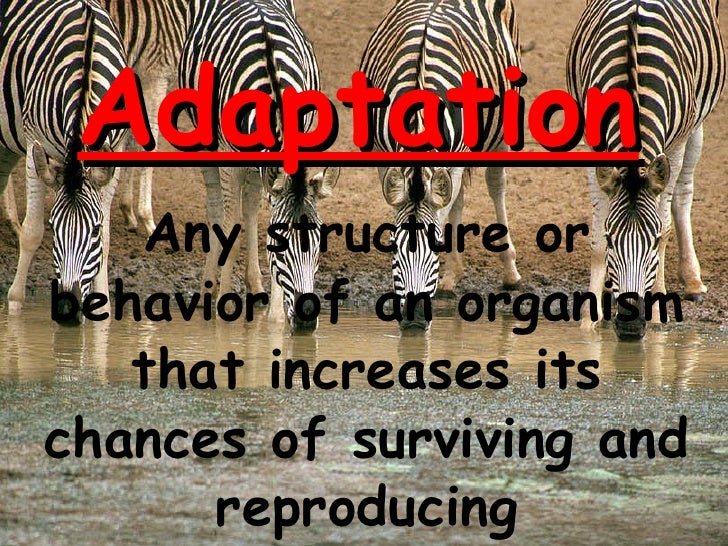 Adaptation Any structure or behavior of an organism that increases its chances of surviving and reproducing