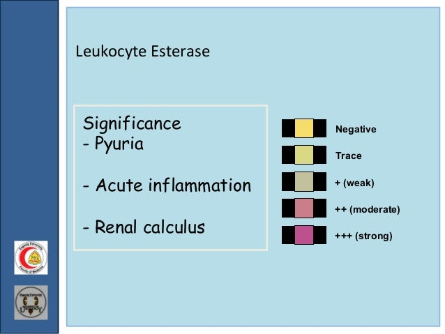 what is wbc esterase trace