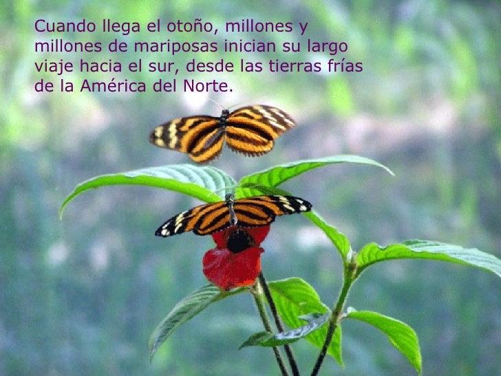 Cuando llega el otoño, millones y millones de mariposas inician su largo viaje hacia el sur, desde las tierras frías de la...