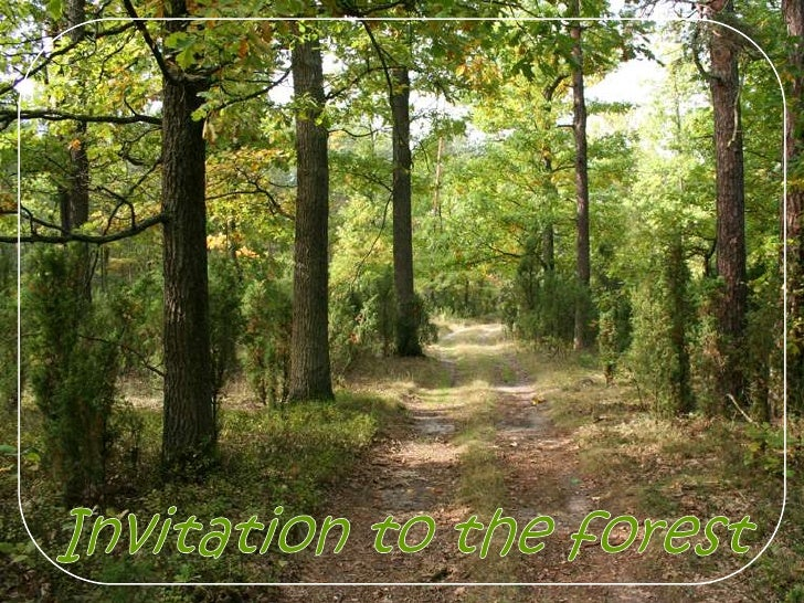 Invitation to the forest<br />