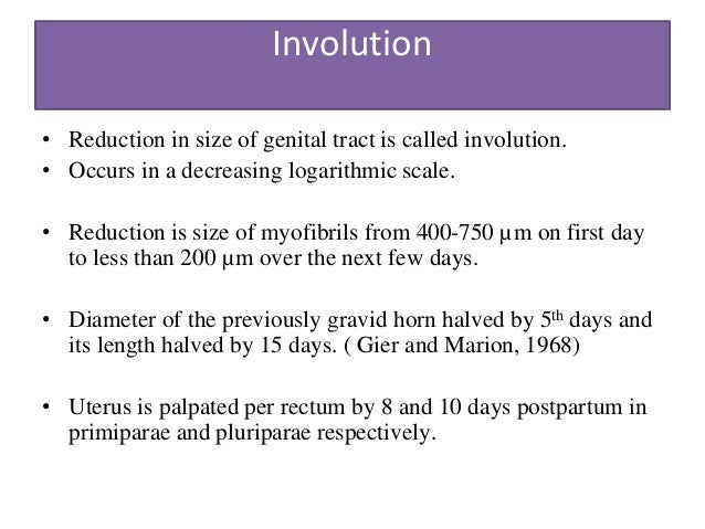 uterine involution in cattle