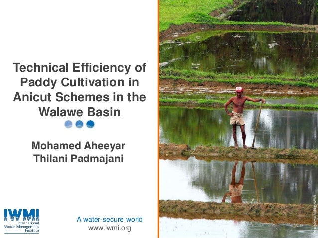 Photo:DavidMolden/IWMI A water-secure world www.iwmi.org Technical Efficiency of Paddy Cultivation in Anicut Schemes in th...