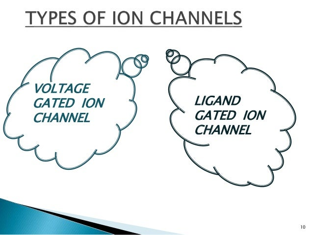 ion channels essay Start studying exam 2 essay questions learn vocabulary, terms, and more with relate the sequence of changes in permeability to changes in the ion channels.