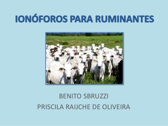 BENITO SBRUZZI PRISCILA RAIJCHE DE OLIVEIRA