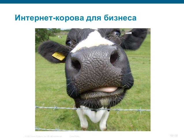 © 2007 Cisco Systems, Inc. All rights reserved. Cisco Public 18/139 Интернет-корова для бизнеса