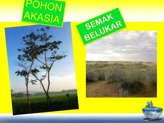 Perbedaan Wilayah Sabana Dan Stepa Dan Persebarannya Di ...