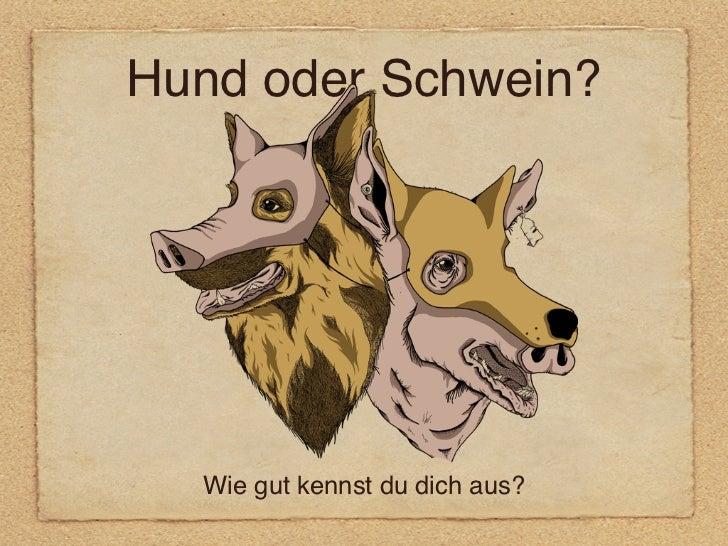 Hund oder Schwein?  Wie gut kennst du dich aus?