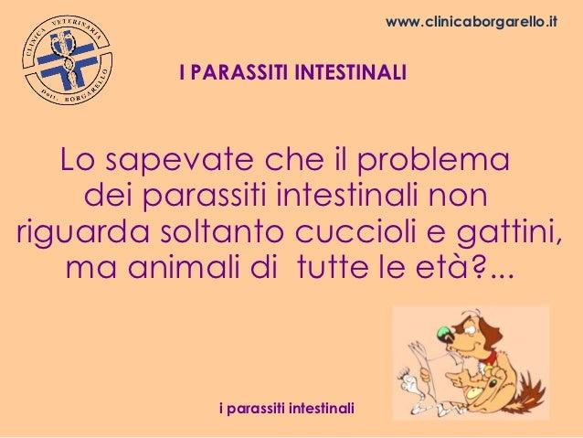 www.clinicaborgarello.it          I PARASSITI INTESTINALI   Lo sapevate che il problema     dei parassiti intestinali nonr...