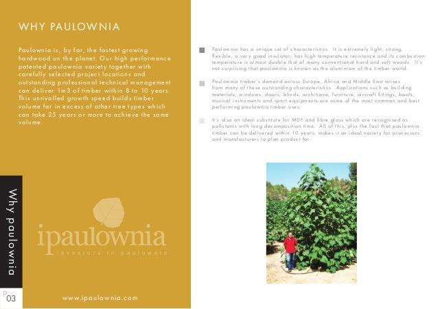 Ipaulownia Investors In Paulownia