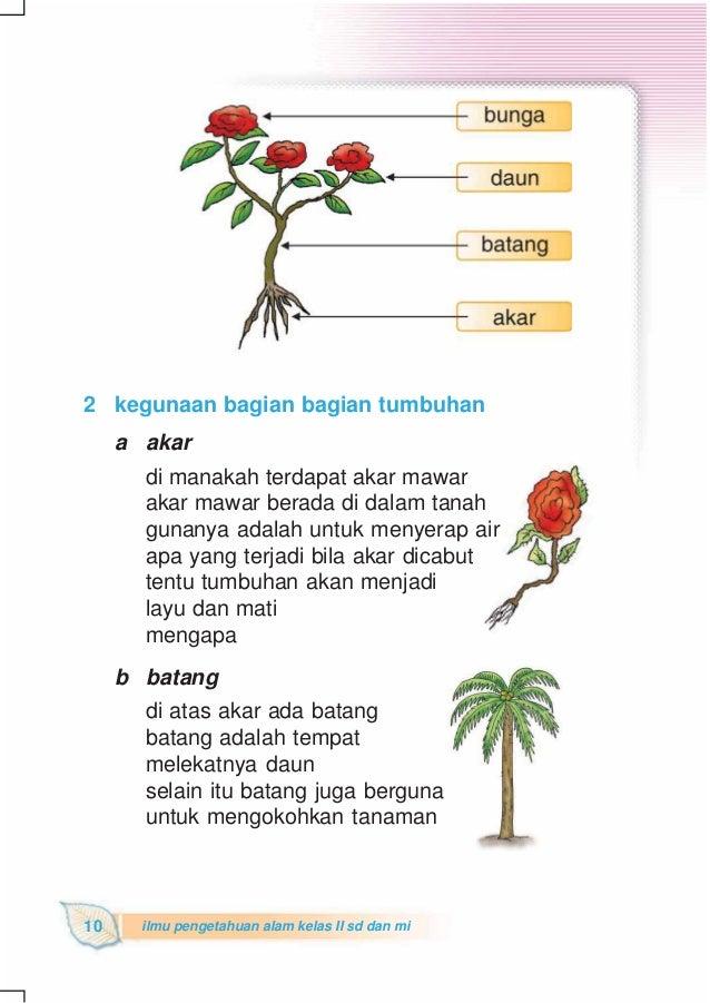 Gambar Bunga Mawar Dan Bagiannya Gambar Bunga Mawar