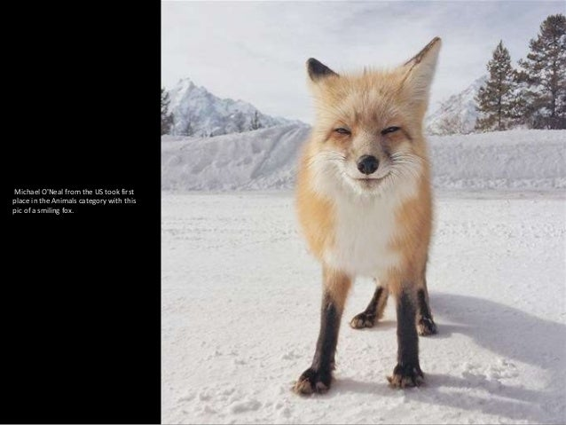 Michael O'Neal from the US took first place in the Animals category with this pic of a smiling fox.