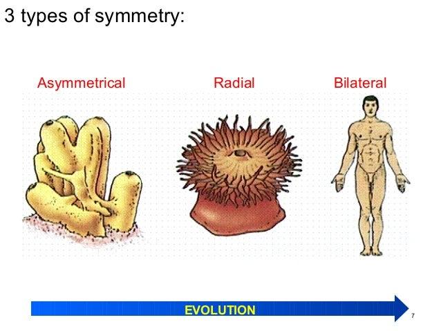 Image of: Living Things Slideshare Kingdom Animalia Phylum Porifera