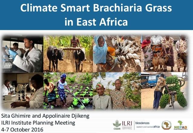 Sita Ghimire and Appolinaire Djikeng ILRI Institute Planning Meeting 4-7 October 2016 Climate Smart Brachiaria Grass in Ea...